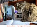 kotofotovernisazh64
