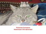 kotofotovernisazh94