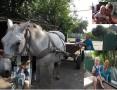 Гуменюк Ирина. Лето в деревне