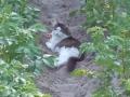 Кочуровы-Кошка-в-картошке