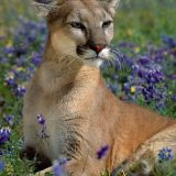 fragrant-wildflowers-cougar-2560-1600